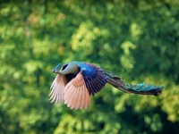 Птицу видно пополету